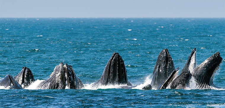 Whale Watching Monterey Bay Attractions
